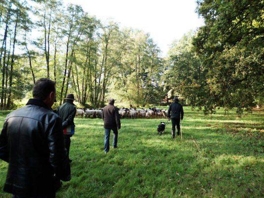 Führungskräftetraining mit Schafen: ein Training ohne Augenbinden und ohne Höhe